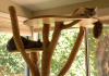 Cats-love-their-cat-tree-pet-care-entertaining-your-cat